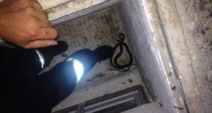 Rettung einer Schlange in Hinterstoder